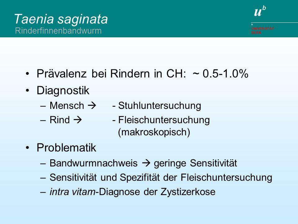 ubub b UNIVERSITÄT BERN Taenia saginata Prävalenz bei Rindern in CH: ~ 0.5-1.0% Diagnostik –Mensch - Stuhluntersuchung –Rind - Fleischuntersuchung (ma