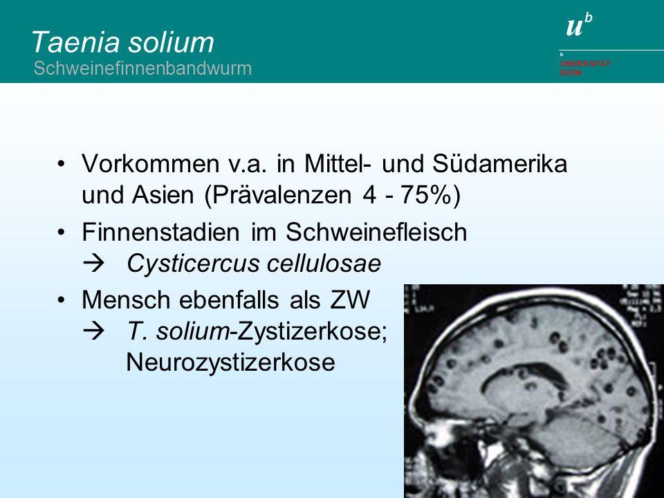 ubub b UNIVERSITÄT BERN Taenia solium Diagnostik –Mensch - Stuhluntersuchung - Proglottiden-/Einachweis (Sens.