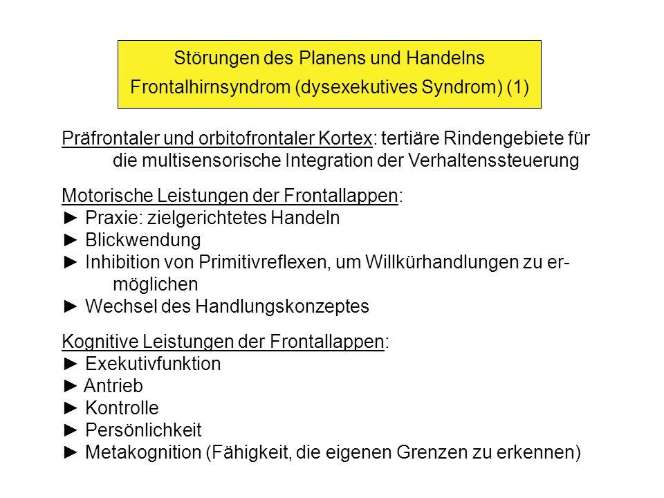 Störungen des Planens und Handelns Frontalhirnsyndrom (dysexekutives Syndrom) (1) Präfrontaler und orbitofrontaler Kortex: tertiäre Rindengebiete für