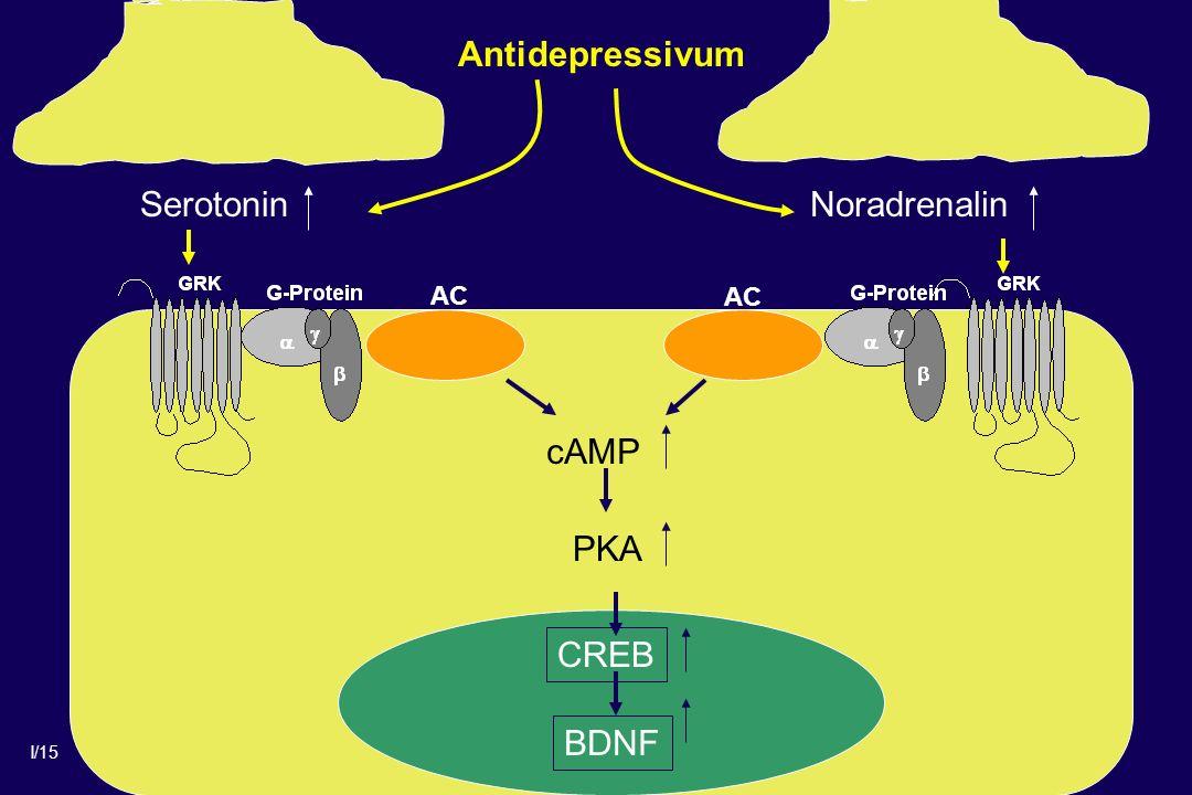 I/15 Antidepressivum AC BDNF SerotoninNoradrenalin cAMP CREB PKA