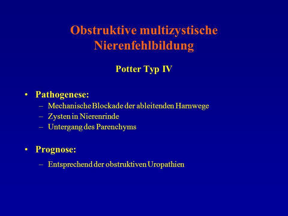 Obstruktive multizystische Nierenfehlbildung Potter Typ IV Pathogenese: –Mechanische Blockade der ableitenden Harnwege –Zysten in Nierenrinde –Unterga