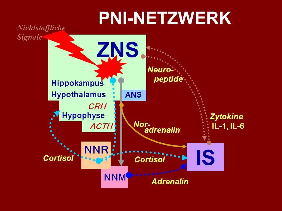Das Immunsystem ist nicht autonom... AUSGANG BETEILIGTE SYSTEME und HORMONE ZIEL ZNS ANS - Noradrenalin IS ZNS ANS - NNM - Adrenalin IS ZNS Hippokampu