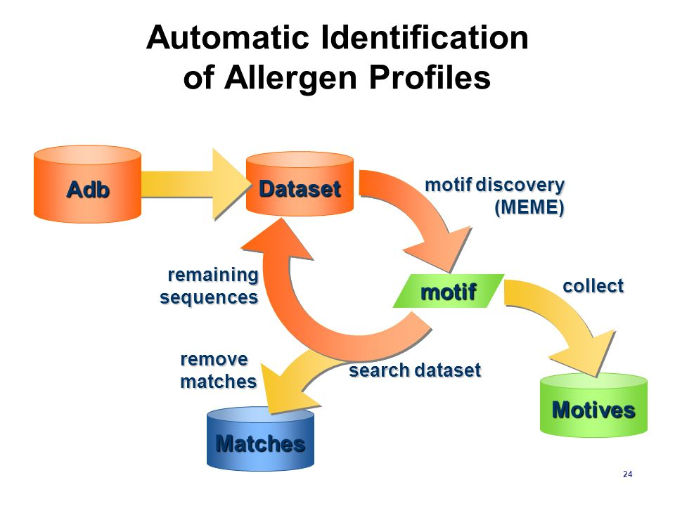 24 Automatic Identification of Allergen Profiles motif discovery (MEME) motif Motives collect remaining sequences Dataset Adb Matches search dataset r