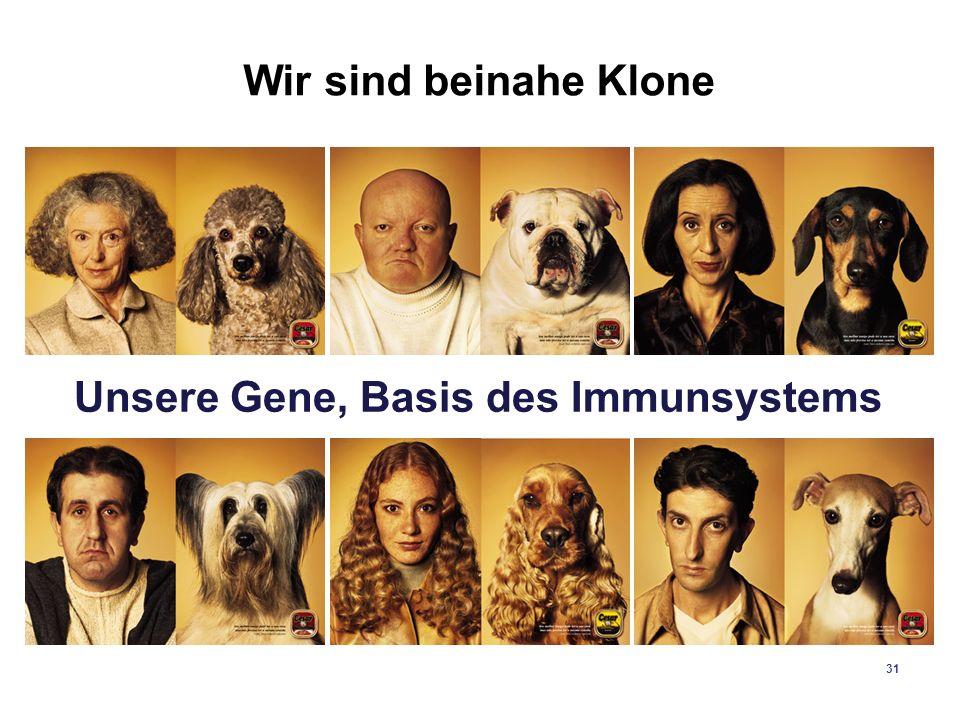 31 Wir sind beinahe Klone Unsere Gene, Basis des Immunsystems