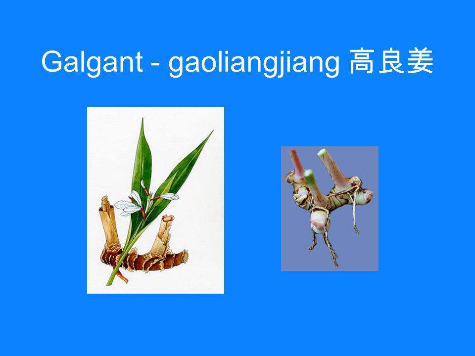 Galgant - gaoliangjiang