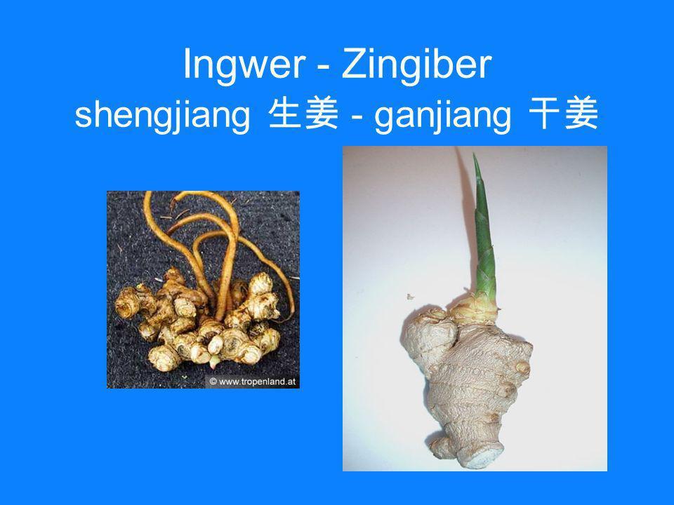 Ingwer - Zingiber shengjiang - ganjiang