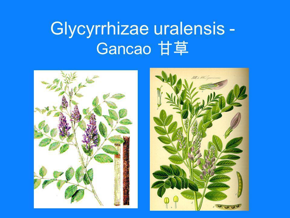 Glycyrrhizae uralensis - Gancao