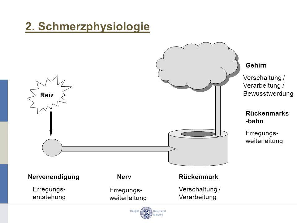 2. Schmerzphysiologie Gehirn RückenmarkNervenendigungNerv Rückenmarks -bahn Erregungs- entstehung Erregungs- weiterleitung Verschaltung / Verarbeitung