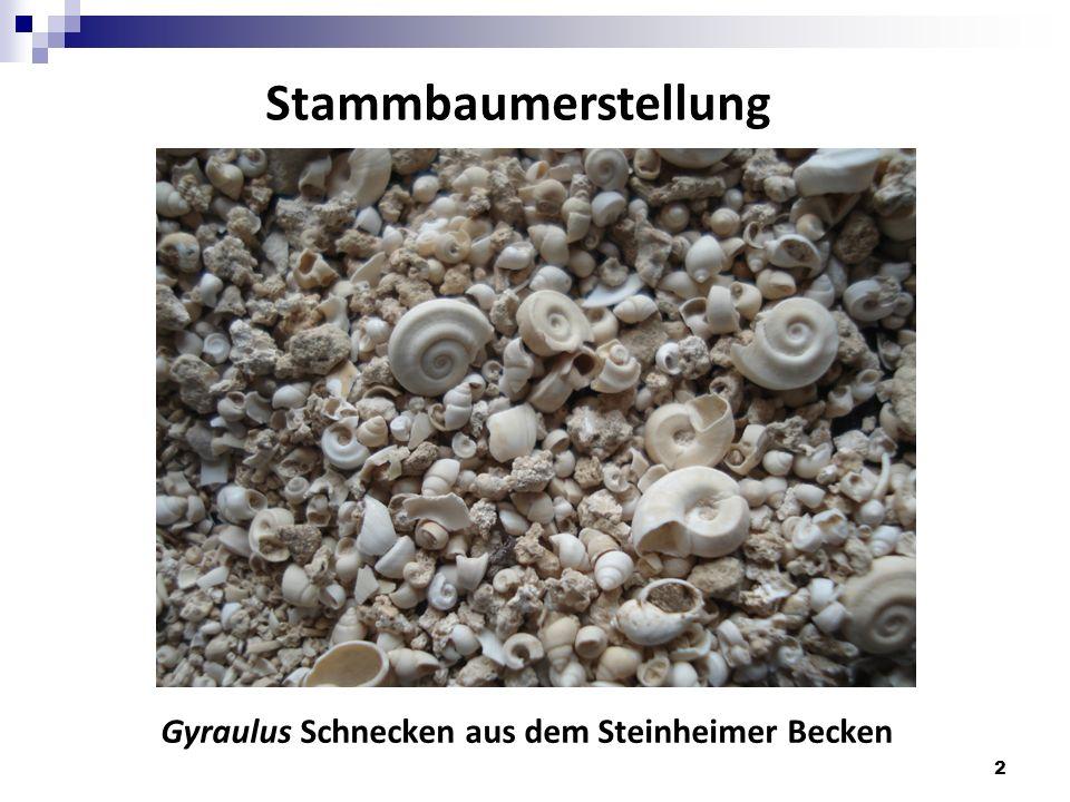 Stammbaumerstellung Gyraulus Schnecken aus dem Steinheimer Becken 2