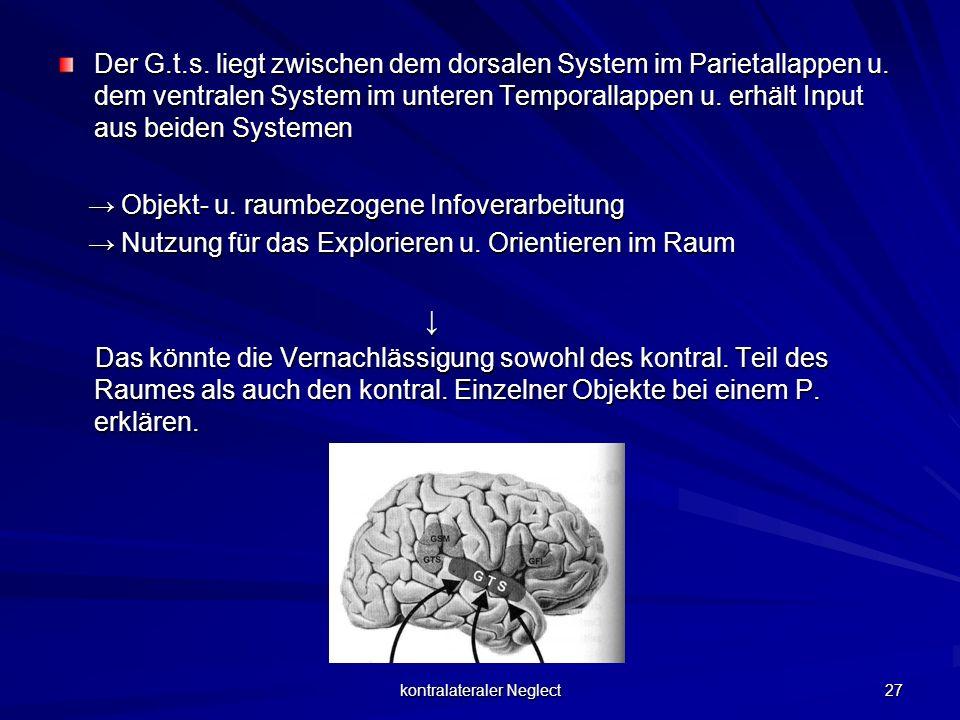 kontralateraler Neglect 27 Der G.t.s. liegt zwischen dem dorsalen System im Parietallappen u. dem ventralen System im unteren Temporallappen u. erhält