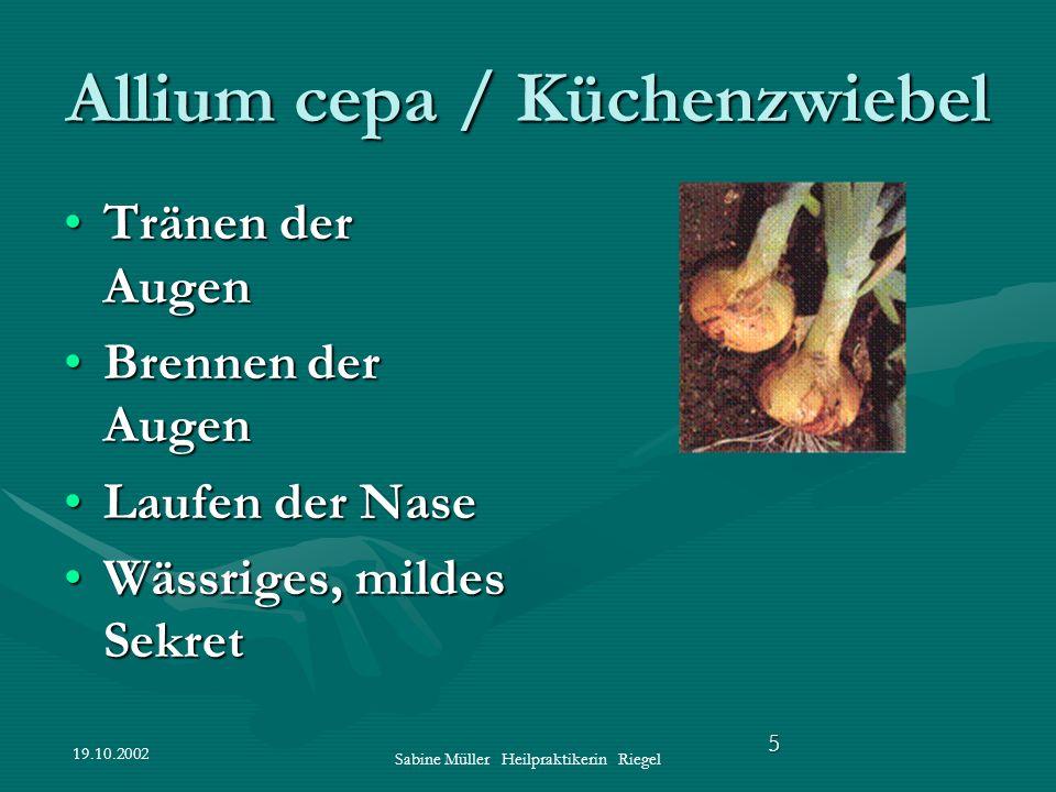 19.10.2002 Sabine Müller Heilpraktikerin Riegel 5 Allium cepa / Küchenzwiebel Tränen der AugenTränen der Augen Brennen der AugenBrennen der Augen Lauf