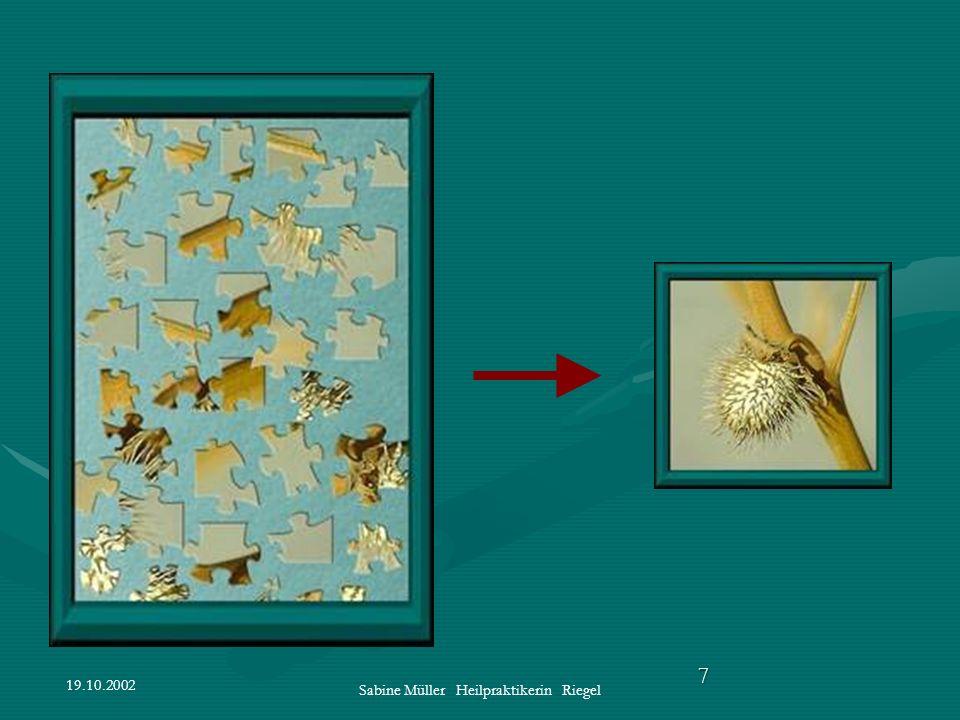 19.10.2002 Sabine Müller Heilpraktikerin Riegel 7