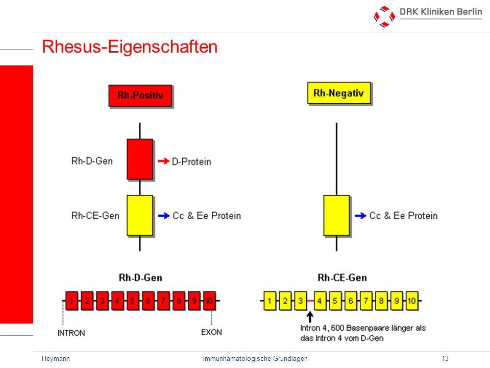 HeymannImmunhämatologische Grundlagen13 Rhesus-Eigenschaften