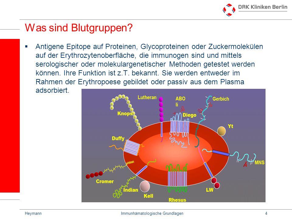HeymannImmunhämatologische Grundlagen4 Was sind Blutgruppen? Antigene Epitope auf Proteinen, Glycoproteinen oder Zuckermolekülen auf der Erythrozyteno