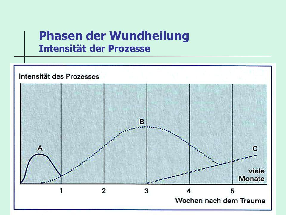 Phasen der Wundheilung Intensität der Prozesse
