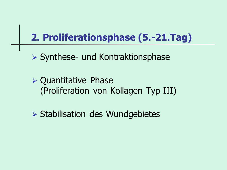 2. Proliferationsphase (5.-21.Tag) Synthese- und Kontraktionsphase Quantitative Phase (Proliferation von Kollagen Typ III) Stabilisation des Wundgebie