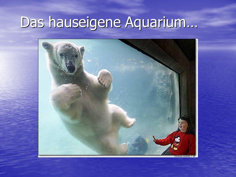Das hauseigene Aquarium…