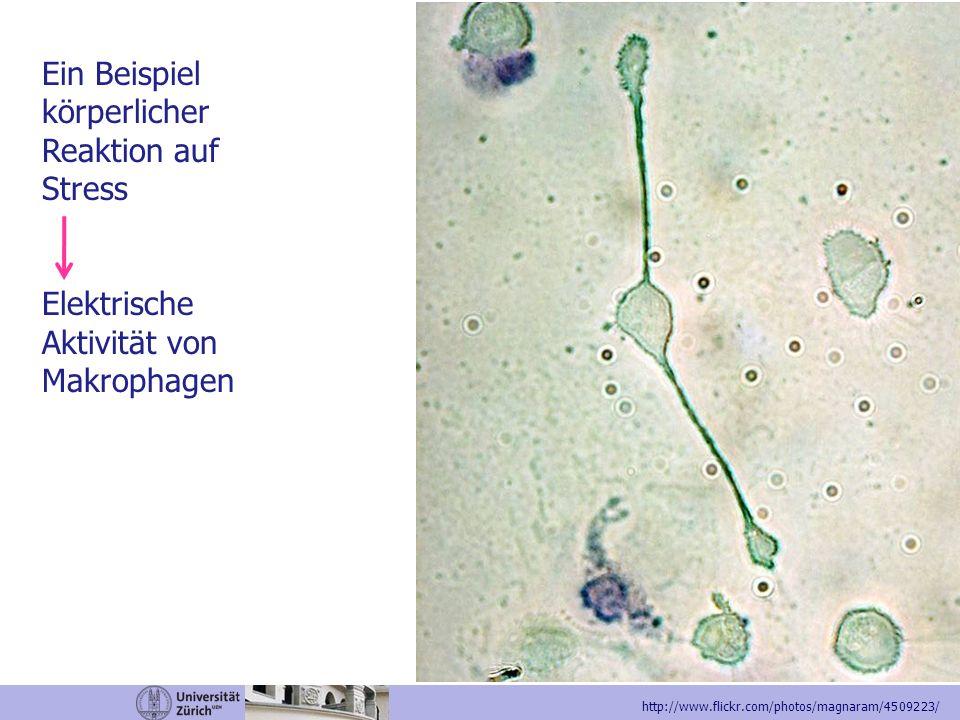 Ein Beispiel körperlicher Reaktion auf Stress Elektrische Aktivität von Makrophagen http://www.flickr.com/photos/magnaram/4509223/