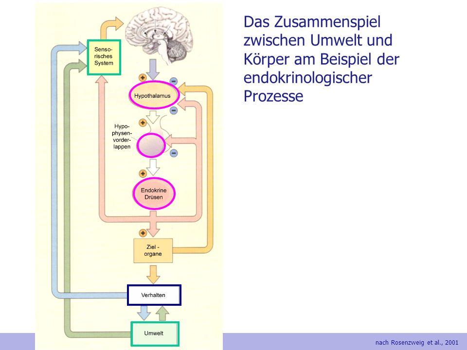 Das Zusammenspiel zwischen Umwelt und Körper am Beispiel der endokrinologischer Prozesse nach Rosenzweig et al., 2001