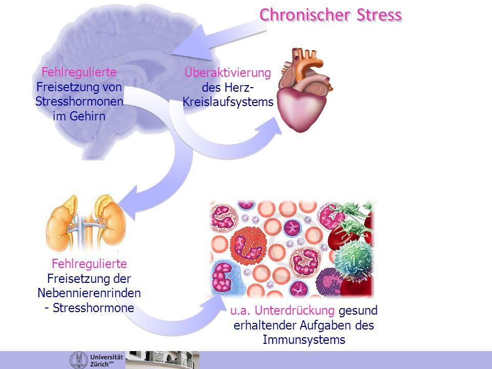 Chronischer Stress Fehlregulierte Freisetzung von Stresshormonen im Gehirn Überaktivierung des Herz- Kreislaufsystems u.a. Unterdrückung gesund erhalt