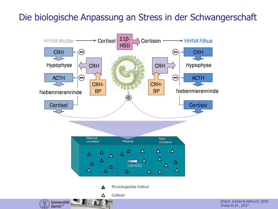 Physiologisches Cortisol Cortison Ehlert, Sieber & Hebisch, 2003 Drake et al., 2007 Die biologische Anpassung an Stress in der Schwangerschaft