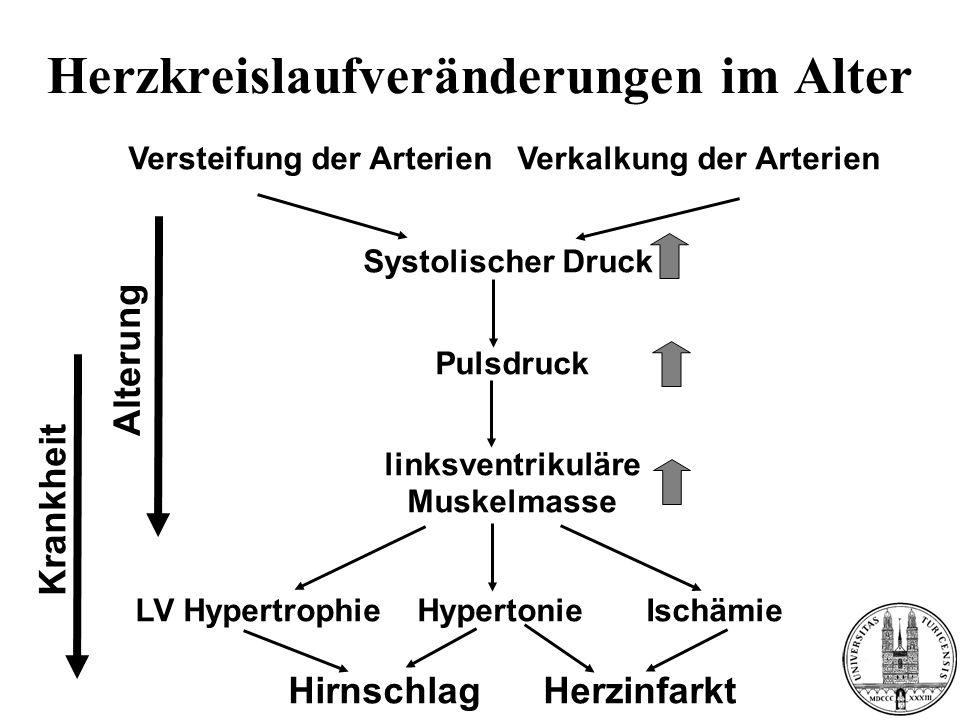 Herzkreislaufveränderungen im Alter Versteifung der Arterien Verkalkung der Arterien Systolischer Druck Pulsdruck linksventrikuläre Muskelmasse LV Hyp