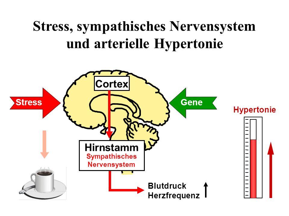 Cortex Hirnstamm Sympathisches Nervensystem Stress Blutdruck Herzfrequenz Gene Stress, sympathisches Nervensystem und arterielle Hypertonie Hypertonie