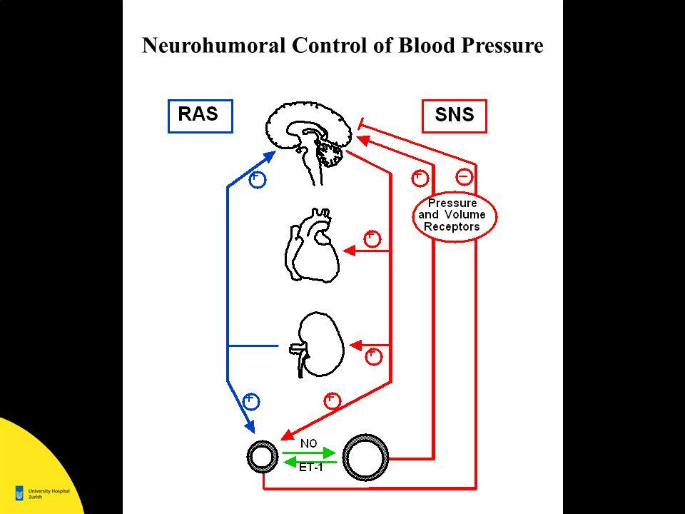 Framingham Study; Am Heart J 1999 Altersabhängigkeit der arteriellen Blutdruckes mmHg Systolischer BlutdruckDiastolischer Blutdruck Alter (Jahre) Frauen Männer Der systolische Blutdruck steigt mit zunehmendem Alter stetig an, bei Frauen stärker als bei Männern.