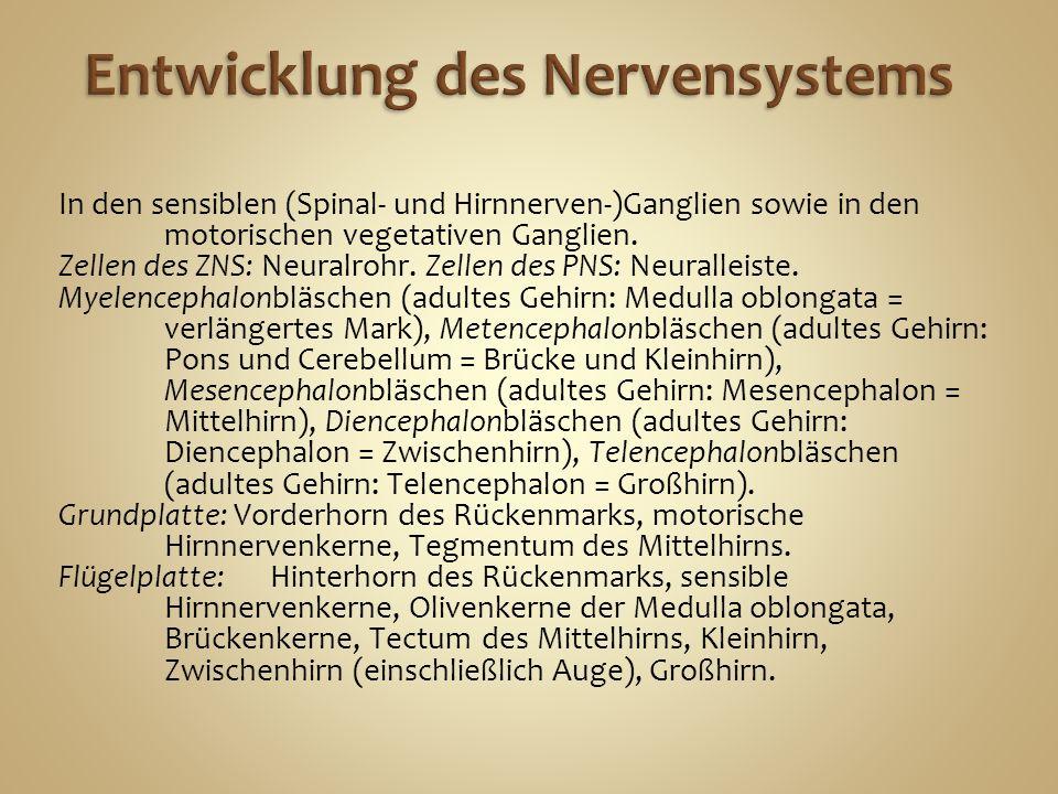In den sensiblen (Spinal- und Hirnnerven-)Ganglien sowie in den motorischen vegetativen Ganglien.