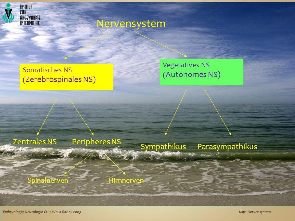 Embryologie Neurologie GN 1 WeLaRaAck 2005Kap1 Nervensystem Nervensystem Somatisches NS ( Zerebrospinales NS) Vegetatives NS ( Autonomes NS) Zentrales NSPeripheres NS ParasympathikusSympathikus SpinalnervenHirnnerven