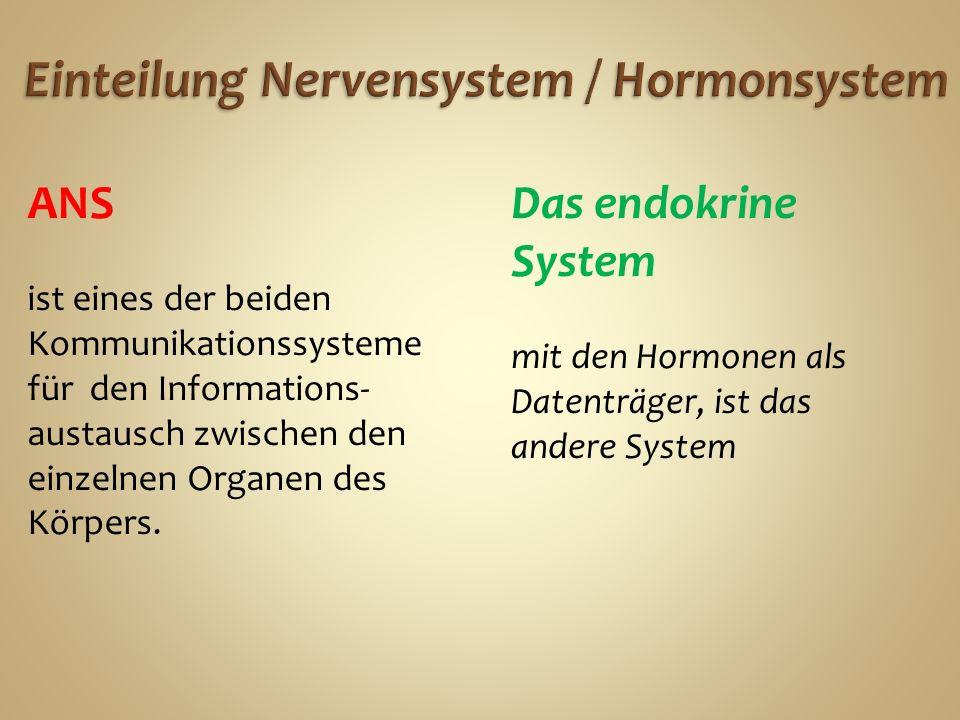ANS ist eines der beiden Kommunikationssysteme für den Informations- austausch zwischen den einzelnen Organen des Körpers.