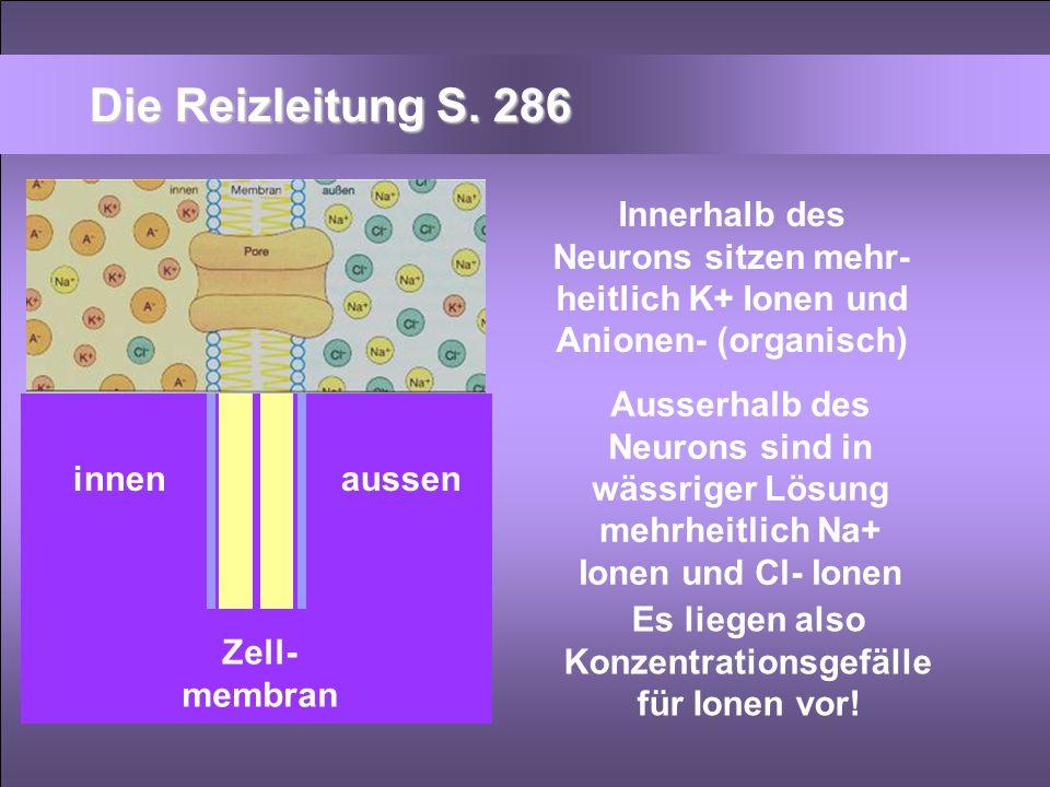 Zell- membran innenaussen Innerhalb des Neurons sitzen mehr- heitlich K+ Ionen und Anionen- (organisch) Ausserhalb des Neurons sind in wässriger Lösun