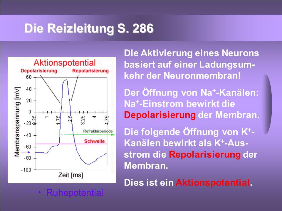 Die Aktivierung eines Neurons basiert auf einer Ladungsum- kehr der Neuronmembran! Der Öffnung von Na + -Kanälen: Na + -Einstrom bewirkt die Depolaris