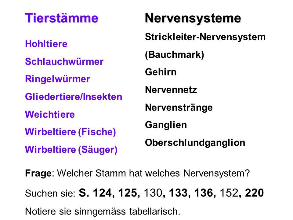 Tierstämme Nervensysteme Strickleiter-Nervensystem (Bauchmark) Gehirn Nervennetz Nervenstränge Ganglien Oberschlundganglion Hohltiere Schlauchwürmer R
