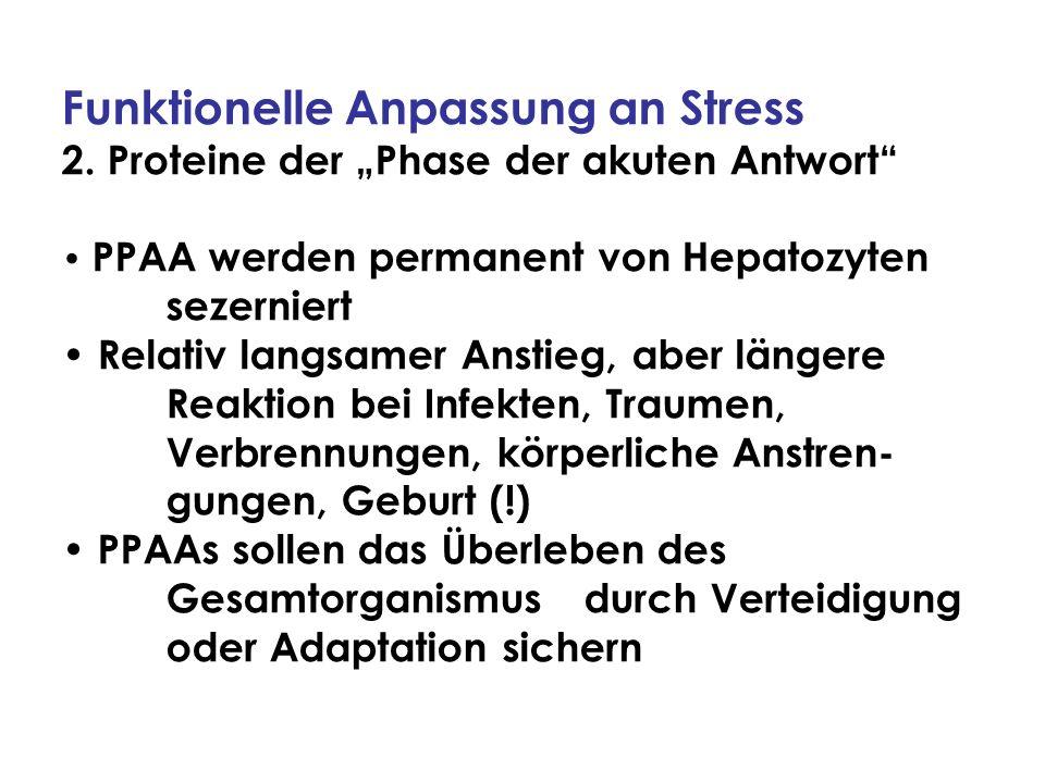 Funktionelle Anpassung an Stress 2. Proteine der Phase der akuten Antwort PPAA werden permanent von Hepatozyten sezerniert Relativ langsamer Anstieg,