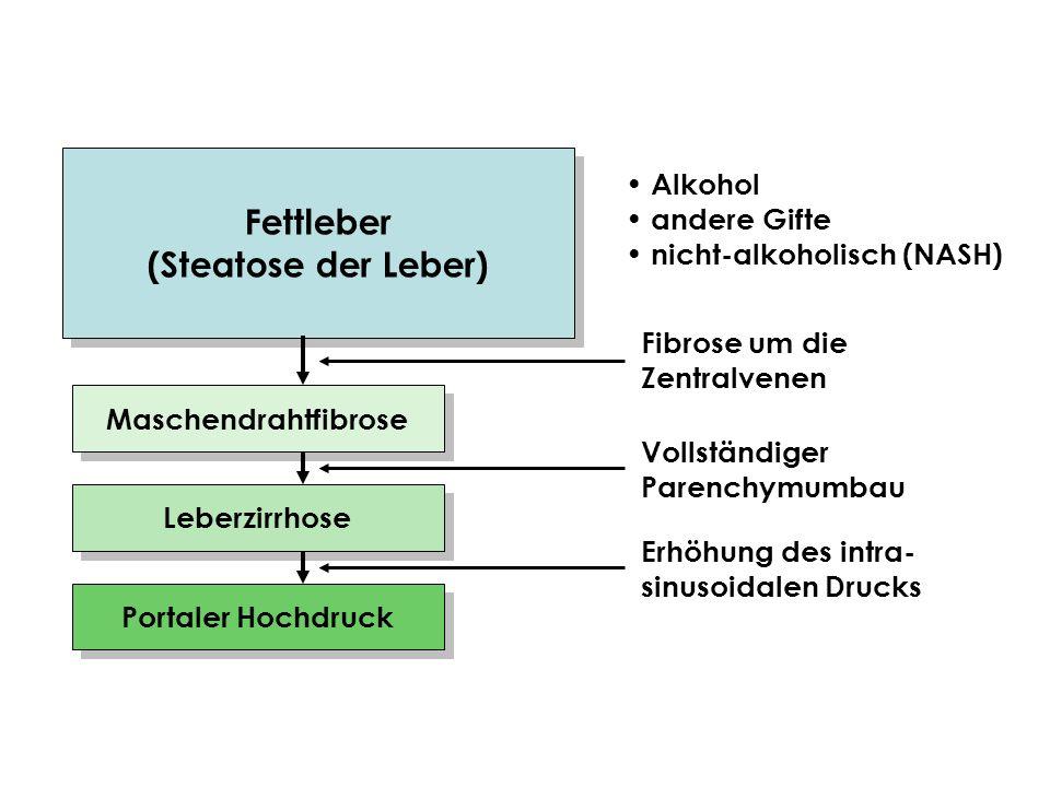 Fettleber (Steatose der Leber) Fettleber (Steatose der Leber) Alkohol andere Gifte nicht-alkoholisch (NASH) Maschendrahtfibrose Leberzirrhose Portaler