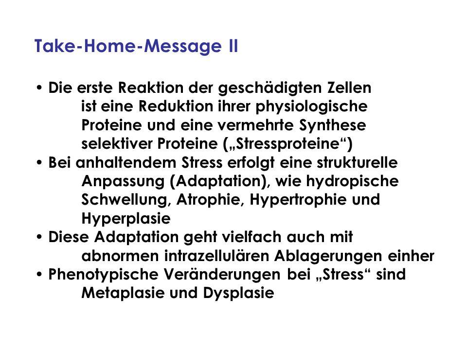 Take-Home-Message II Die erste Reaktion der geschädigten Zellen ist eine Reduktion ihrer physiologische Proteine und eine vermehrte Synthese selektive