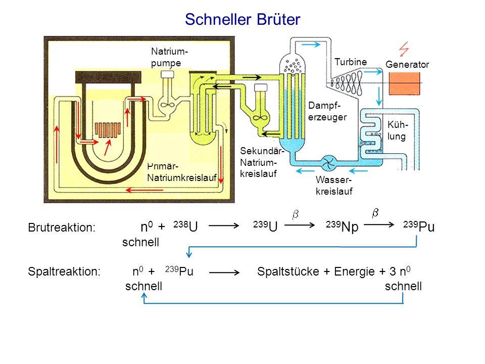 Schneller Brüter Brutreaktion: n 0 + 238 U 239 U 239 Np 239 Pu schnell Spaltreaktion: n 0 + 239 Pu Spaltstücke + Energie + 3 n 0 schnell schnell Primä