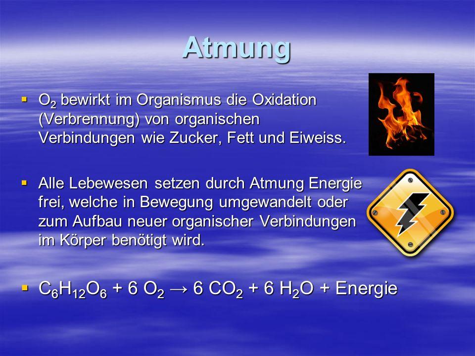 Atmung O2 bewirkt im Organismus die Oxidation (Verbrennung) von organischen Verbindungen wie Zucker, Fett und Eiweiss. Alle Lebewesen setzen durch Atm