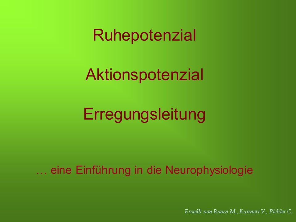 Erstellt von Braun M., Kunnert V., Pichler C. Ruhepotenzial Aktionspotenzial Erregungsleitung … eine Einführung in die Neurophysiologie
