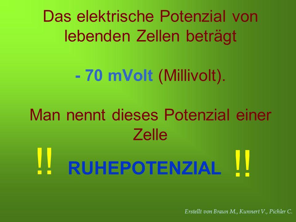 Erstellt von Braun M., Kunnert V., Pichler C. Das elektrische Potenzial von lebenden Zellen beträgt - 70 mVolt (Millivolt). Man nennt dieses Potenzial