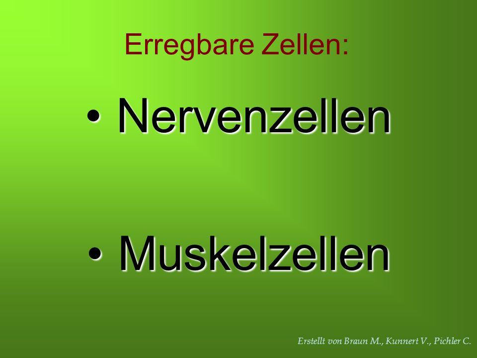 Erstellt von Braun M., Kunnert V., Pichler C. Erregbare Zellen: Nervenzellen Nervenzellen Muskelzellen Muskelzellen