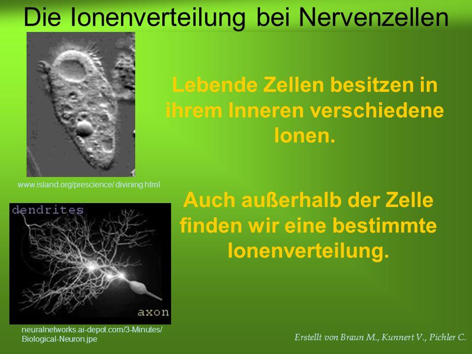 Erstellt von Braun M., Kunnert V., Pichler C. Lebende Zellen besitzen in ihrem Inneren verschiedene Ionen. Auch außerhalb der Zelle finden wir eine be