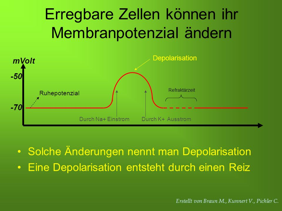 Erstellt von Braun M., Kunnert V., Pichler C. Erregbare Zellen können ihr Membranpotenzial ändern -70 -50 mVolt Ruhepotenzial Durch Na+ EinstromDurch