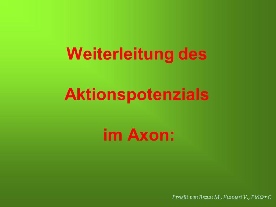 Erstellt von Braun M., Kunnert V., Pichler C. Weiterleitung des Aktionspotenzials im Axon: