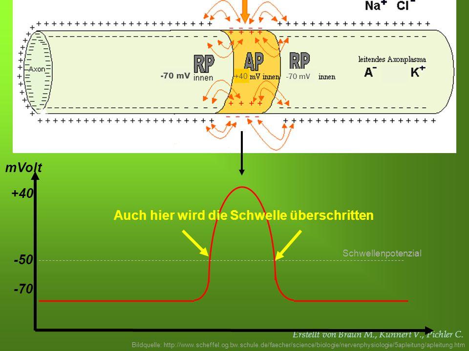 Erstellt von Braun M., Kunnert V., Pichler C. -70 -50 mVolt Schwellenpotenzial Auch hier wird die Schwelle überschritten +40 Bildquelle: http://www.sc