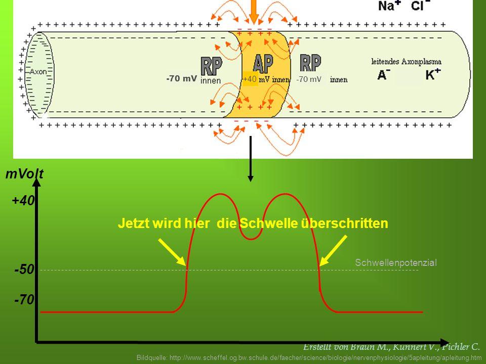 Erstellt von Braun M., Kunnert V., Pichler C. -70 -50 mVolt Schwellenpotenzial +40 Jetzt wird hier die Schwelle überschritten Bildquelle: http://www.s
