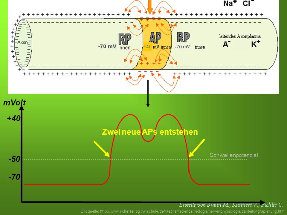 Erstellt von Braun M., Kunnert V., Pichler C. -70 -50 mVolt Schwellenpotenzial +40 Zwei neue APs entstehen Bildquelle: http://www.scheffel.og.bw.schul