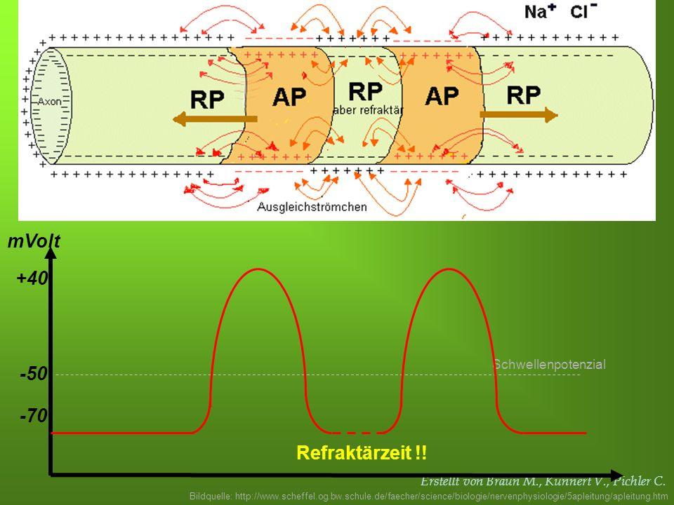 Erstellt von Braun M., Kunnert V., Pichler C. -70 -50 mVolt Schwellenpotenzial +40 Refraktärzeit !! Bildquelle: http://www.scheffel.og.bw.schule.de/fa