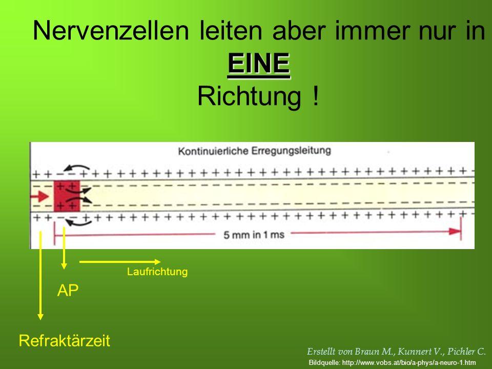 Erstellt von Braun M., Kunnert V., Pichler C. EINE Nervenzellen leiten aber immer nur in EINE Richtung ! Refraktärzeit AP Laufrichtung Bildquelle: htt